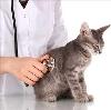Ветеринарные клиники в Чистополе